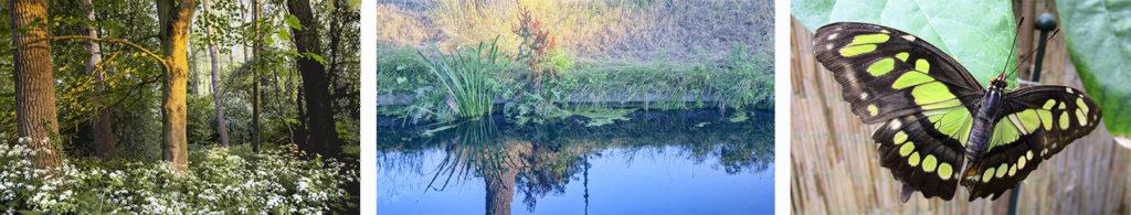 Kleur in moeder natuur